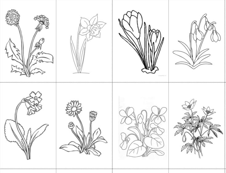 Jarní květiny - třísložkové karty a k nim omalovánky